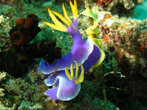 Nudibranch - Nudibranch